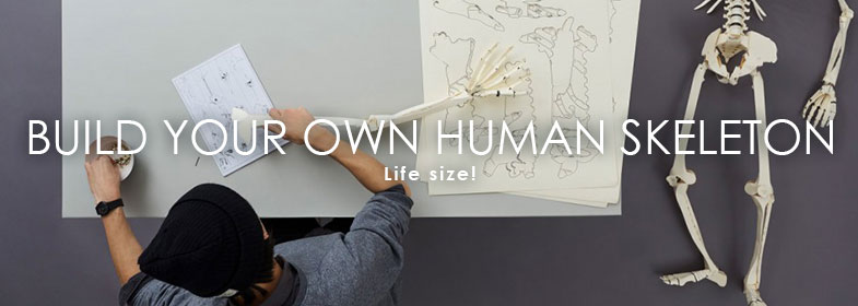 BUILD YOUR OWN HUMAN SKELETON – LIFE SIZE!