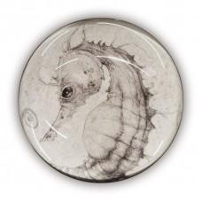 HIPPOCAMPUS di Stefano Bessoni