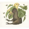 Kiwi e pulcino - ORIGINALE