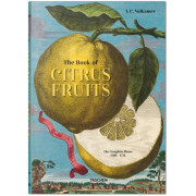 JOHANN CHRISTOPH VOLKAMER, CITRUS FRUITS (INT) - XL