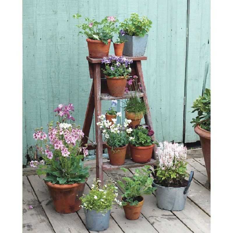 Idee per piccoli giardini zo54 pineglen for Piccoli giardini fioriti