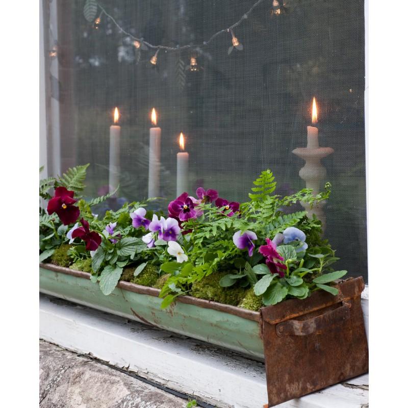 35 piccoli giardini invernali logos for Idee x piccoli giardini
