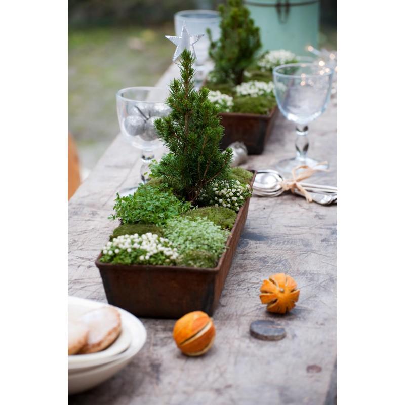 35 piccoli giardini invernali logos - Immagini di aiuole da giardino ...