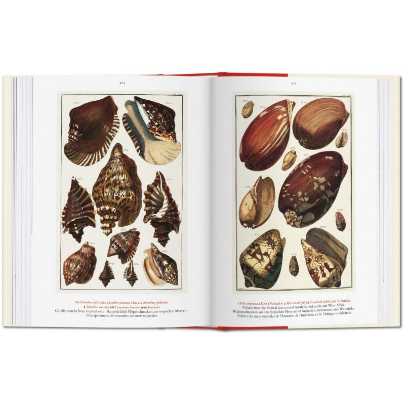 Albertus Seba Cabinet Of Natural Curiosities Iep